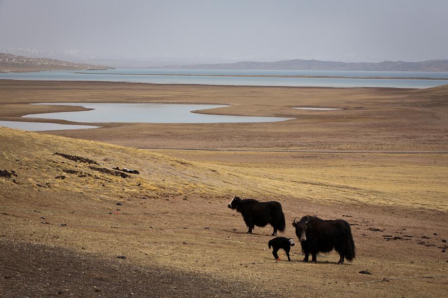 Tibetan prairie, Qinghai, Tibetan plateau